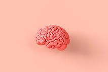Etapa 7 - Manual desvendando o cérebro